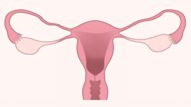 Jak využít aromaterapii při kvasinkové infekci a dalších gynekologických obtížích?